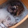 2匹の仔猫の里親探してます❗