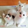 白猫3兄妹可愛いデス❤️