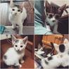 かわいい子猫がいろいろいっぱい!家族を募集中!