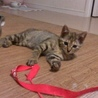 サビトラ美猫ちゃんです