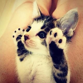 子猫 蔵之介