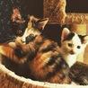 子猫 毛糸ちゃん サムネイル2