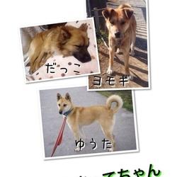 7月5日 川越駅近く☆保健所レスキュー犬猫里親会☆室内 サムネイル2
