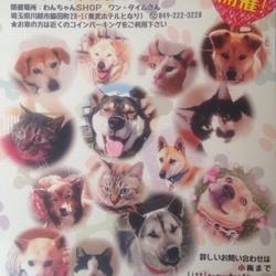 7月5日 川越駅近く☆保健所レスキュー犬猫里親会☆室内 サムネイル3