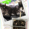 可愛い♡サビ猫ちゃん♀