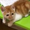 かわいいオスの猫ちゃんです