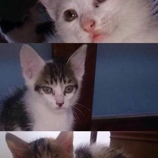 人懐っこい子猫ちゃんです!3匹兄弟です!