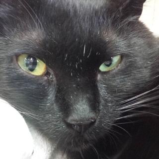 かわいい黒猫遊ぶの大好きゴロニャンです!