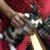 三毛子猫のひめちゃん✾7か月✾手術済 サムネイル3