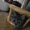 ビニール袋に入れて捨てられた仔猫のハルちゃん