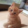 【子猫】【生後1ヶ月】
