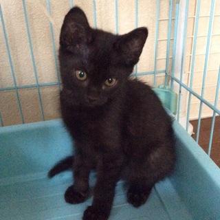 かわいくて元気いっぱい黒子猫!