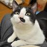 今年の1月にもらわれて行った犬みたいな性格の猫。里親さんからの写真。