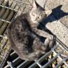 道端で動けない子猫を発見。車に跳ねられたっぽい。