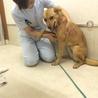 保護して1ヶ月。動物病院がセラピードッグにもらってくれました(^v^)