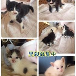 犬猫譲渡会☆川越☆雑種犬猫多数 サムネイル2