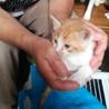 白茶のかわいい子猫が待ってます(^-^)