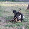 おばあさんが飼育放棄した黒柴。新しい飼い主さんが見つかりました(^^)