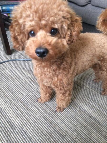 保護 犬 札幌