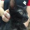 黒子猫のマロン 男の子 2か月半 サムネイル3