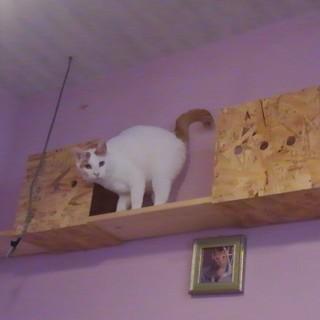 抱っこが大好きな猫のモコ。