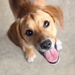 いばらきの犬と猫譲渡会in笠間市