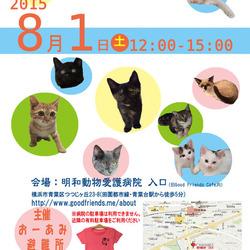 8月1日は仔猫まつり! (プラス仔犬2匹!)