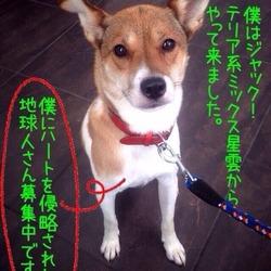 8月9日川越で犬猫譲渡会☆雑種、猫 多数
