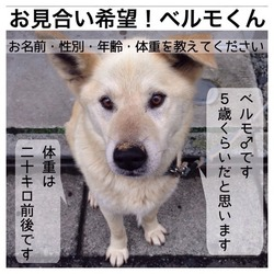 8月9日川越で犬猫譲渡会☆雑種、猫 多数 サムネイル2