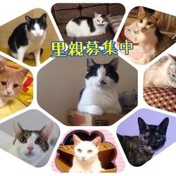 8月9日川越で犬猫譲渡会☆雑種、猫 多数 サムネイル3