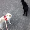 【大至急】穏やかな成猫、虚勢済、外飼OK