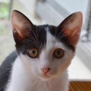 保健所で生まれた猫ちゃん