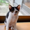 保健所で生まれた猫ちゃん サムネイル2
