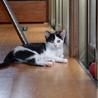 保健所で生まれた猫ちゃん サムネイル3