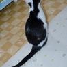 保健所で生まれた猫ちゃん サムネイル4