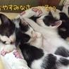 保健所で生まれた猫ちゃん サムネイル6