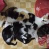 保健所で生まれた猫ちゃん サムネイル5