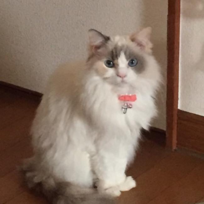 yurinaharuharuのカバー写真