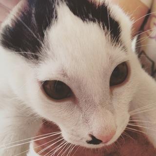 かわいいぞ 子猫 ココマル