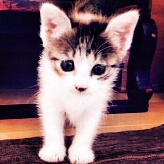子猫のサミ