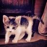 子猫のサミ サムネイル2