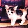 子猫のサミ サムネイル3