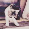 子猫のサミ サムネイル4