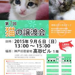 猫の譲渡会 in 神戸三宮
