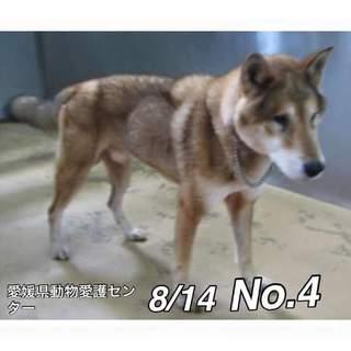 愛媛県動物愛護センターに保護されています!