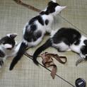 福島っ子 ♂♀子猫たち