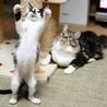 福島っ子 ♂♀子猫たち サムネイル2
