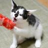 福島っ子 ♂♀子猫たち サムネイル3