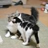 福島っ子 ♂♀子猫たち サムネイル5