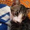 子猫 木久蔵 サムネイル2